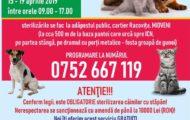 campanie-sterilizare-animale-caini-pisici